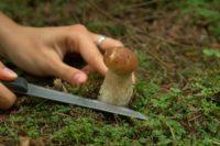 В Нижегородской области началась грибная пора