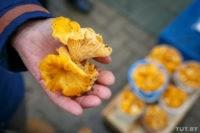 Сколько белорусов наказали в этом году за незаконный сбор грибов
