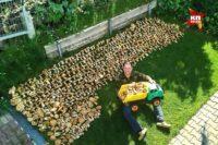В Сибири небывалый урожай грибов: собирают, сколько могут унести!