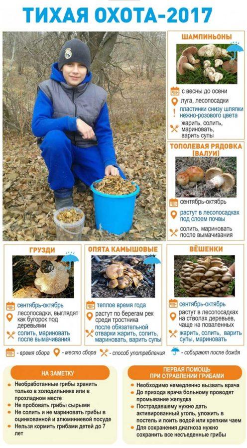 """Специалисты по """"тихой охоте"""" в Харабалинском, Ахтубинском, Енотаевском и Черноярском районах собирают астраханские грибы ведрами."""