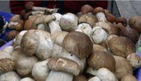 Опрос: треть россиян никогда в жизни не собирала грибов