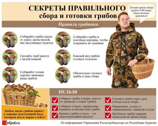 Что ещё нужно знать о правилах сбора грибов, смотрите в нашей памятке.