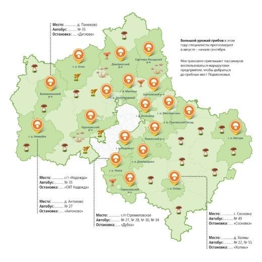 Добраться до грибных мест в Московской области можно на рейсовых автобусах. Маршруты для любителей тихой охоты сообщили в МОСТРАНСАВТО