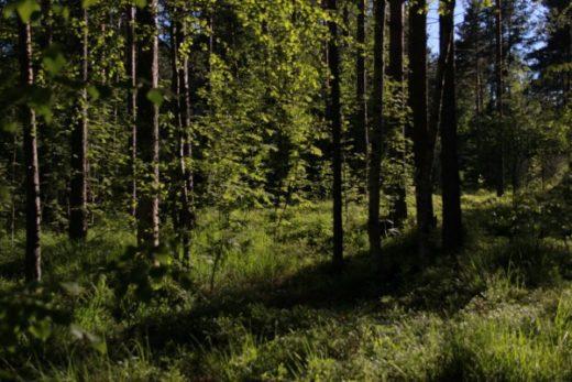 Главный синоптик Петербурга Александр Колесов призвал горожан не бояться ночных заморозков в Ленинградской области и отправляться в лес за грибами