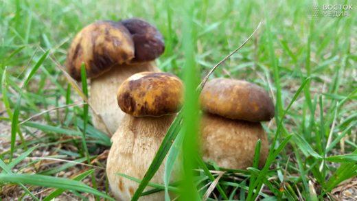 В Приморье в самом разгаре грибной сезон Фото: Юлия Береговая / РИА «Восток-Медиа»
