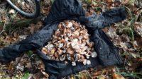 30 грибников оштрафовали за выходные в воронежском заповеднике