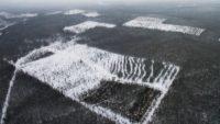 Предсказано уничтожение сибирского леса через 15 лет