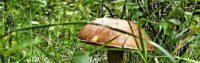 Первые грибы в Подмосковье 2019: где собирать сморчки, вешенки и летние опята