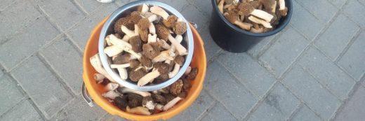 Похожие на пчелиные соты грибы начали продавать в Новосибирске