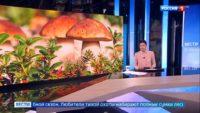 Тихая охота началась: подмосковные грибники открыли сезон раньше обычного