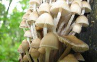 Осторожно: грибной сезон