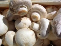 Армения развивает производство грибов