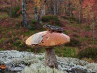 В путь за призовым грибом