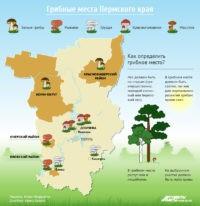 Где в Пермском крае есть грибные места?