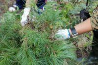 В 2014 году в Московской области планируется провести лесовосстановление на площади 7030,9 га