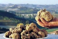 Итальянские трюфели растут в цене на российском спросе