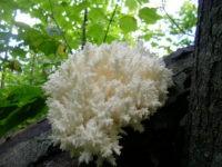 В Москве обнаружили два редких вида растений и грибов