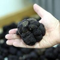 Черные трюфели тоже страдают от перемены климата