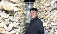 В Северной Корее создали восстанавливающий напиток из грибов