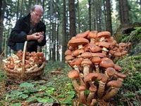 Под Волгоградом пройдет чемпионат по сбору грибов