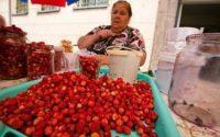 Литва: природоохранники: собирать ягоды и грибы надо так, чтобы не навредить лесу