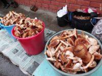Дожди лишили жителей Кузбасса большого урожая грибов