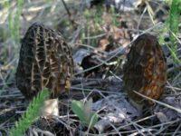 В Мурманской области пошли первые грибы