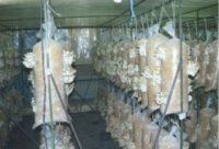 Житель Актобе оштрафован на 8 тысяч тенге за выращивание грибов