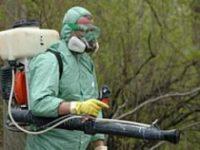 Ульяновские леса обрабатывают от вредителей