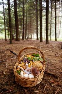 Лукошко противоопухолевых грибов: мейтаке, рейши, шиитаке и кордицепс