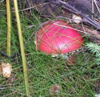 Показываем свои грибы