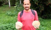 Гигантские грибы из Европы поселились в екатеринбургском дендропарке