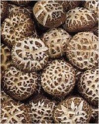 Новый супер-продукт - грибы шиитаке