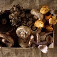 Полезные свойства грибов: результаты исследований