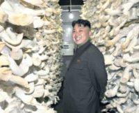Фермер из КНДР выращивает грибы весом 20 кг