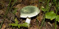 Летнее наводнение оставило без грибов жителей Приморья в этом году