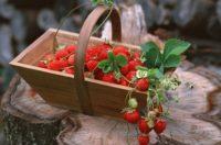 В Севастополе платить придется за пикники и землянику