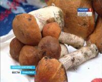 Нижегородские рынки наводнились лесными грибами: что говорят врачи?