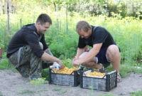 Белоруссия: продавец лисичек на трассе: «За сезон зарабатываю 10 миллионов. Выплачу кредит и куплю сахара на закатки»