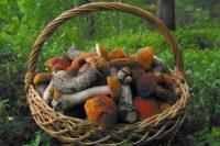 Каждый гриб имеет свою тайну