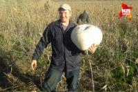 На Кубани грибники нашли 10-килограммовый дождевик