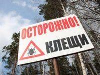 В Алтайском крае отмечается спад активности клещей