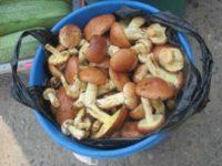 Амурчан предупреждают о грибах от нелегальных торговцев