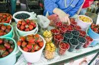 В Белоруссии обещают небывалый урожай лисичек и черники