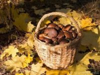 Леса Германии заполонили иностранные грибники