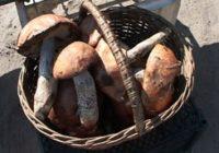 За грибы и орехи в лесах Харьковщины придется платить?
