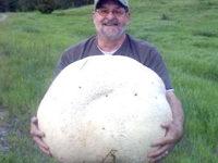 Житель Канады нашел 26-килограммовый гриб