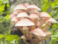 Этой осенью выдался богатый урожай грибов