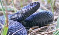 В Пензенской области области активизировались змеи