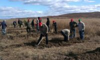 Около 6000 саженцев лиственницы высадили в Благовещенском районе Приамурья